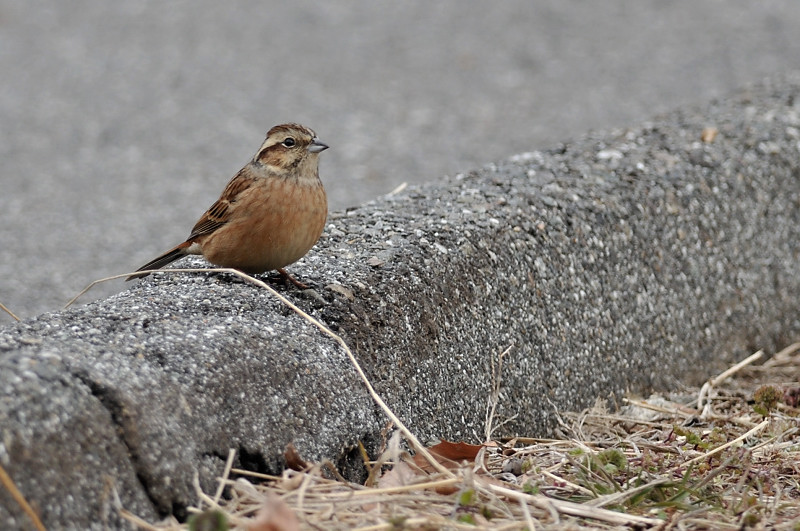 コガラと他の鳥さん_f0053272_14255727.jpg