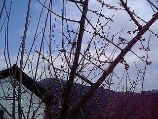 梅の木に思う_c0060919_18304086.jpg