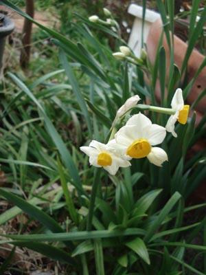 花便り....蓮のいる庭_e0110719_2049379.jpg