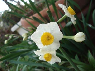 花便り....蓮のいる庭_e0110719_2246620.jpg