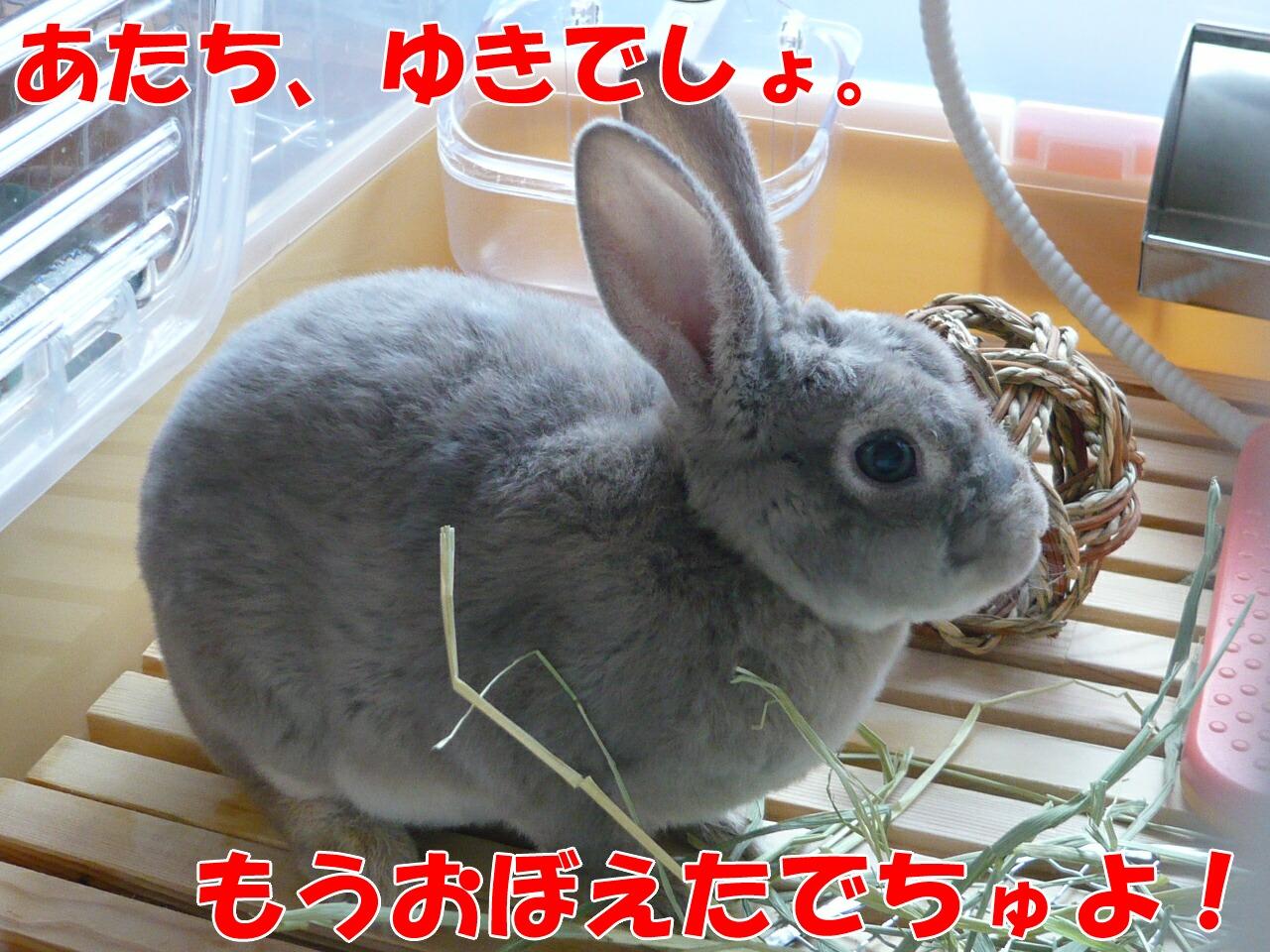 c0151439_10115433.jpg