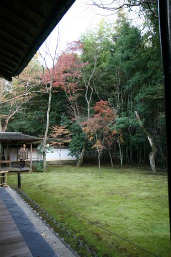 京都 大徳寺 高桐院 楓と苔_e0127948_12435494.jpg
