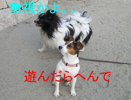 f0053952_12524611.jpg
