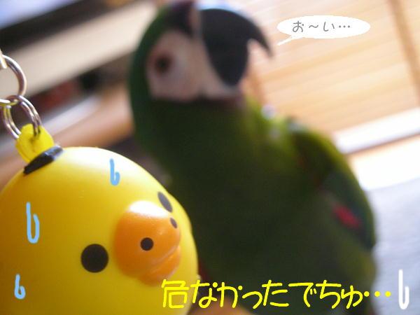 f0132055_9354732.jpg