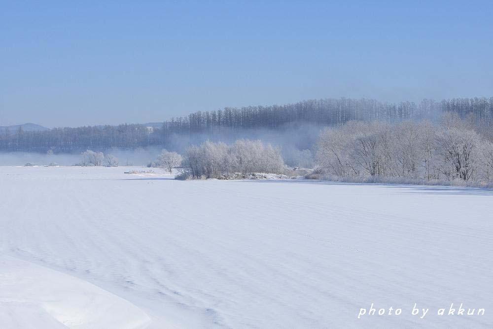 冬も終わりに近いネイちゃん画像より~_a0039860_20511774.jpg