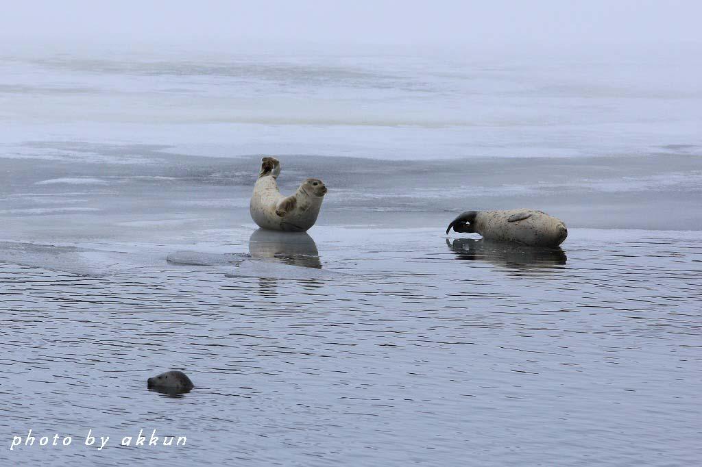 冬も終わりに近いネイちゃん画像より~_a0039860_20515138.jpg