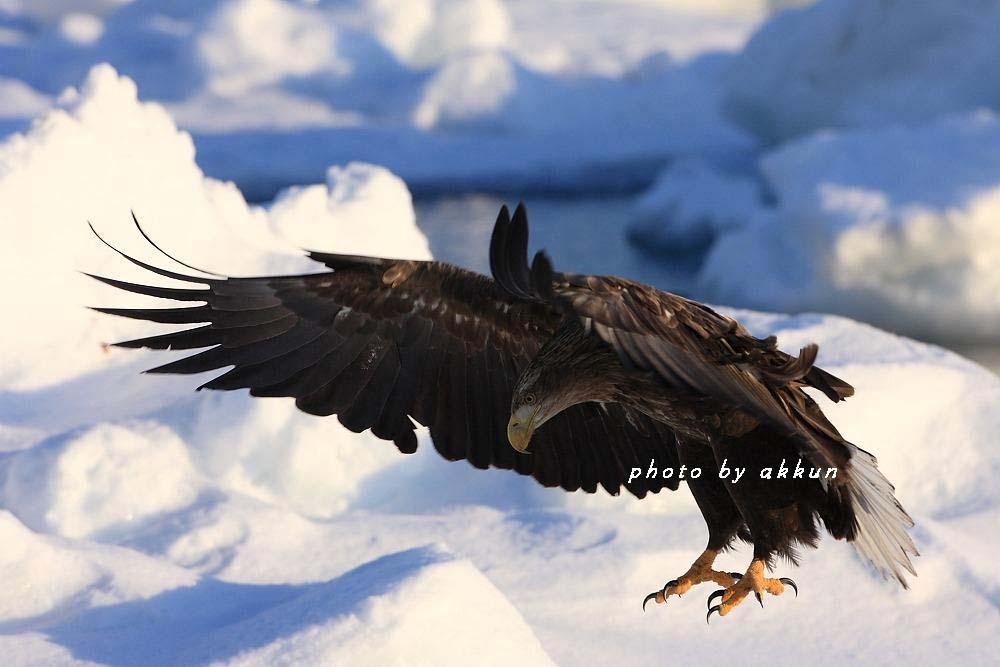 冬も終わりに近いネイちゃん画像より~_a0039860_2053622.jpg