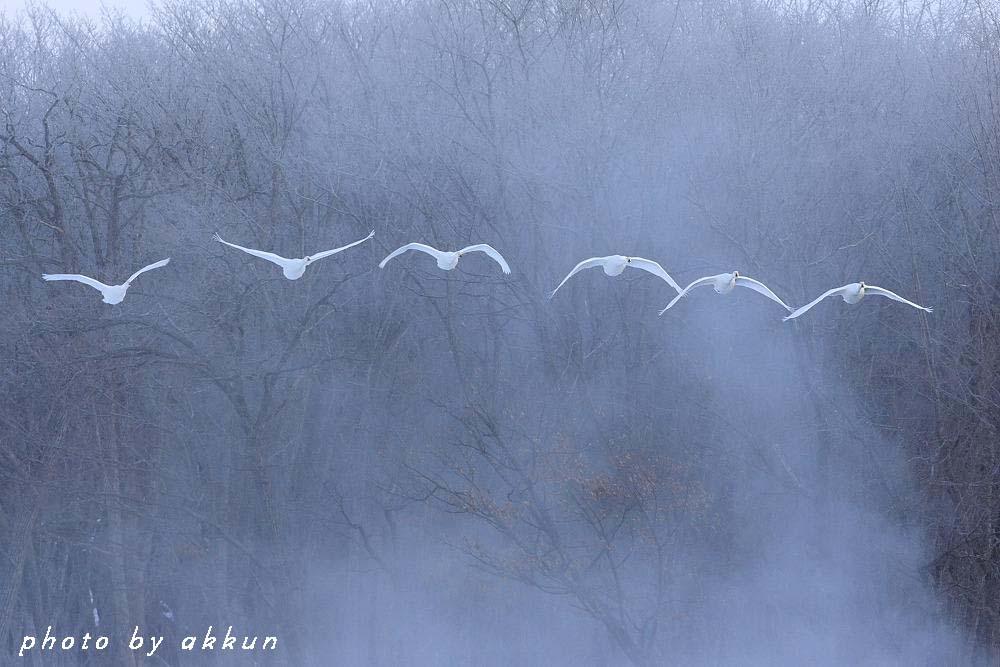 冬も終わりに近いネイちゃん画像より~_a0039860_2181281.jpg