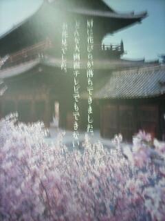 「桜」まもなく・・・_a0076495_16593663.jpg