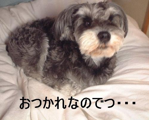 d0079701_210217.jpg
