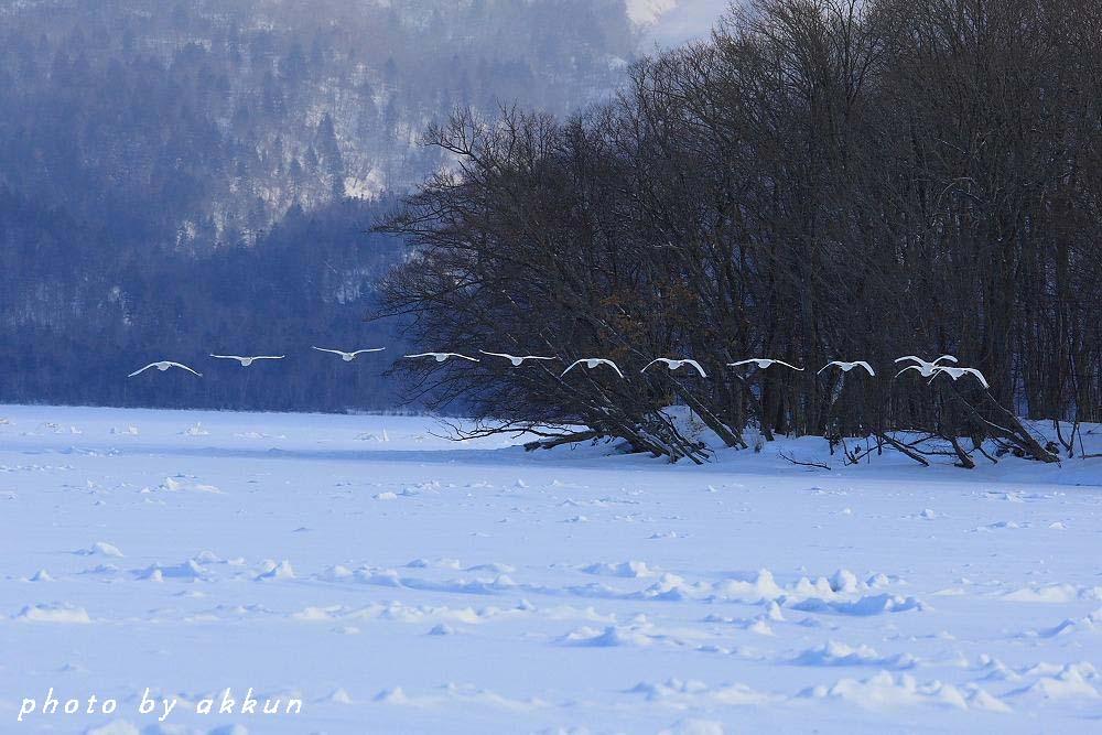 今日は天気が良い道東だすよ~_a0039860_2153716.jpg