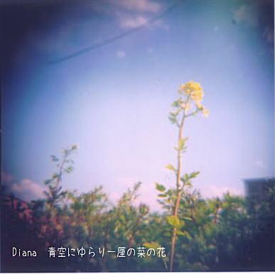 春・・LaLaLa_d0006718_16343168.jpg