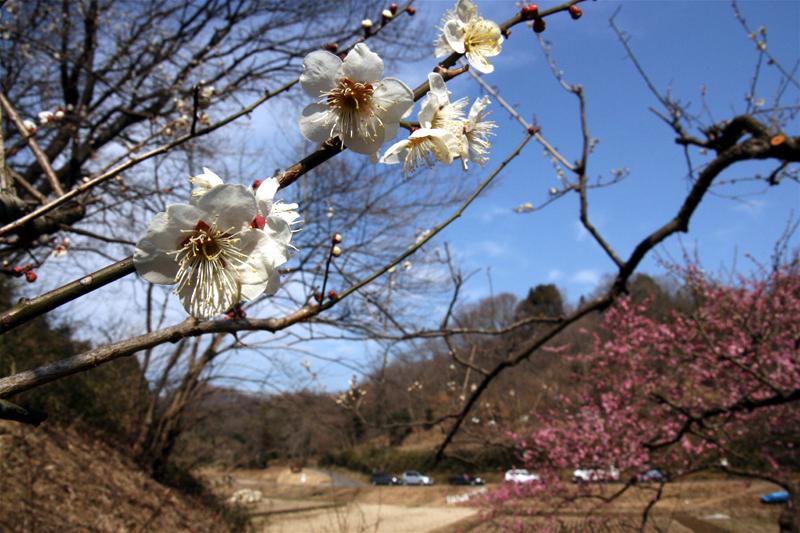 2008年3月上旬 多摩丘陵にも春が来た_d0054625_21201157.jpg