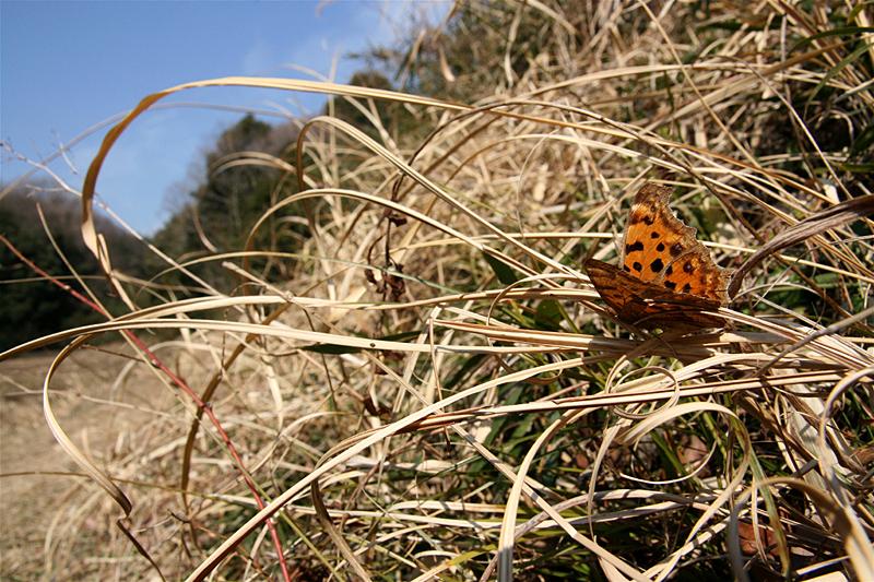 2008年3月上旬 多摩丘陵にも春が来た_d0054625_21232313.jpg