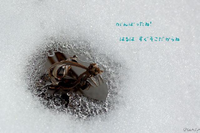 c0144353_1340158.jpg