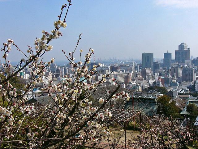 神戸北野天満神社の梅_b0063958_8384799.jpg