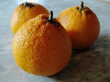 オレンジピール_c0055363_21234243.jpg