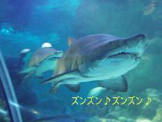 クアラルンプールの水族館_f0144385_16505816.jpg