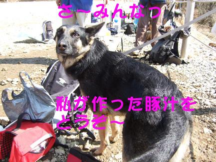 e0060693_8302014.jpg