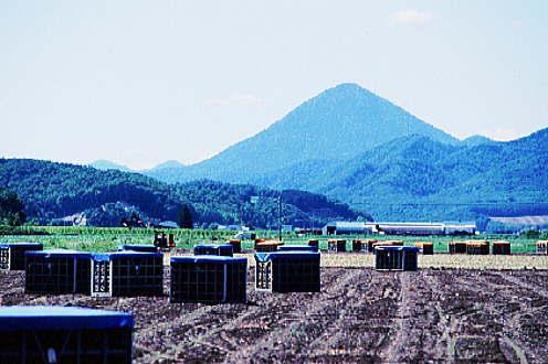 3月8日、多峰古峰(たっぷこっぷ)山写真編_f0138096_10541038.jpg
