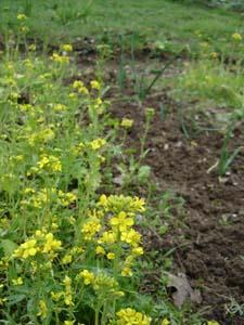 3月の畑_f0106597_22153910.jpg
