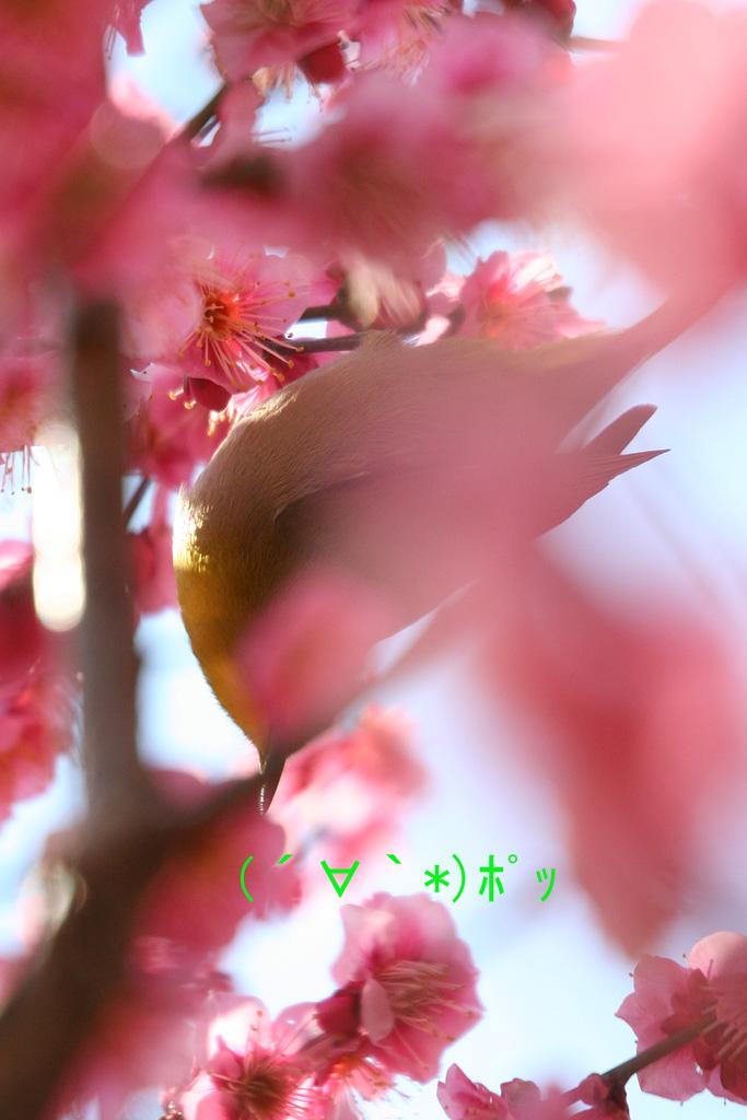 d0148060_1875368.jpg