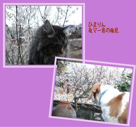 d0081464_20121029.jpg