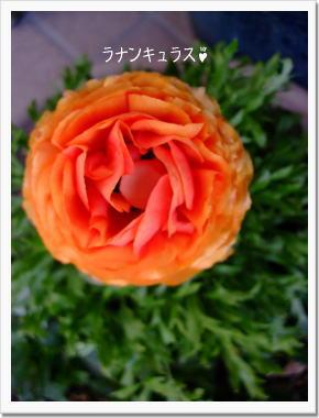 d0081464_20123996.jpg