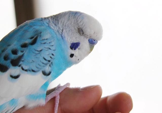 Too Blue_c0118496_20313831.jpg