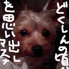 c0036617_1234663.jpg