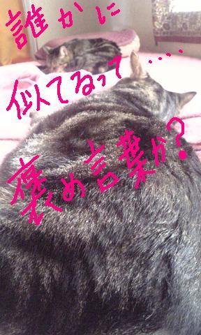b0122260_223586.jpg