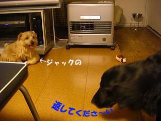 d0043478_1121775.jpg