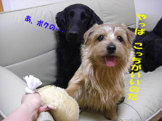 d0043478_16142.jpg