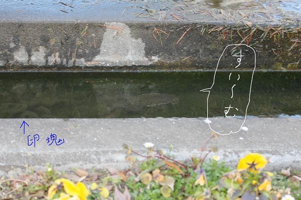 f0154796_12272878.jpg