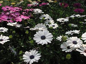春らしい花_c0141652_17144932.jpg