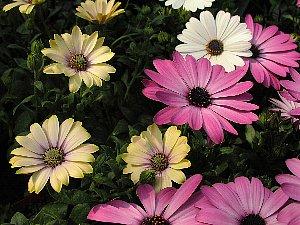 春らしい花_c0141652_1715651.jpg