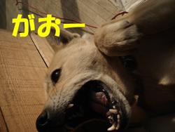 f0132070_1712505.jpg