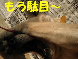 f0132070_17132090.jpg