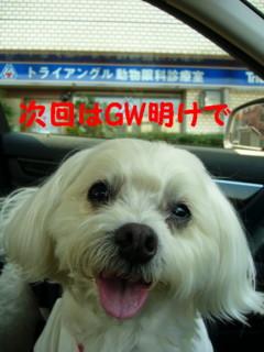 f0145192_1634140.jpg