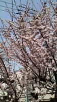 春を感じて♪_b0063399_23221224.jpg