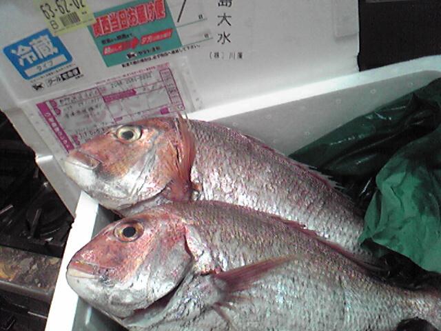 鮮魚_b0115006_1114744.jpg