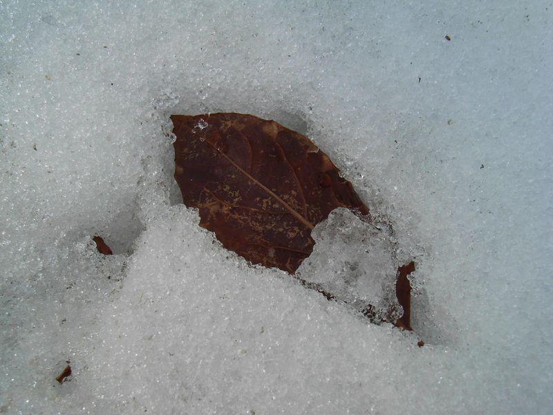 エコな融雪剤と咲かなかったサザンカ_c0025115_2064728.jpg