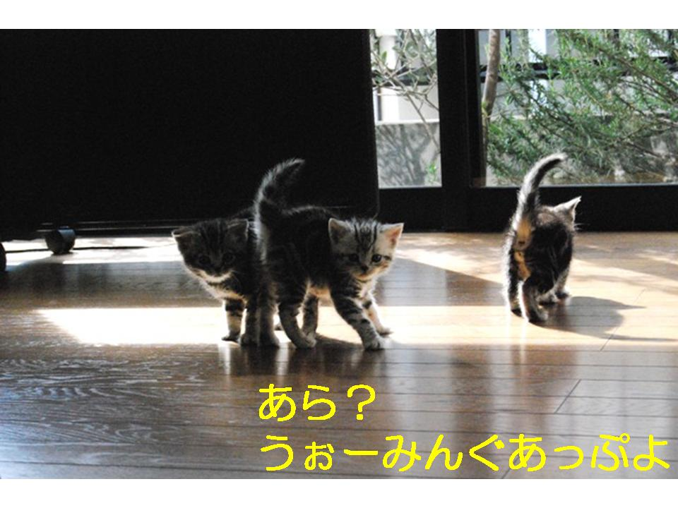 f0043859_0351017.jpg