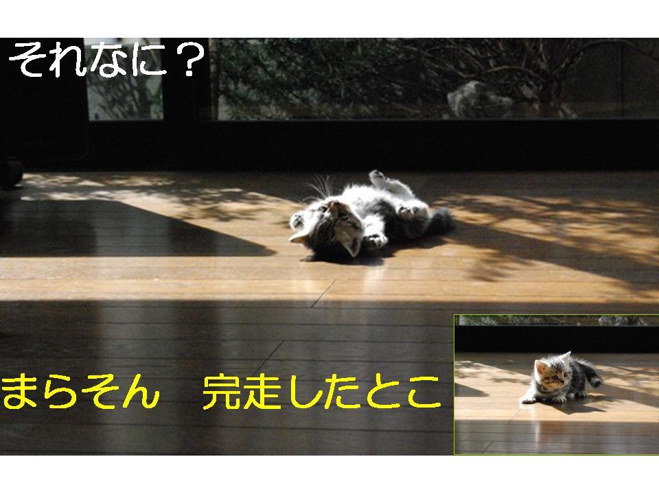 f0043859_0352477.jpg