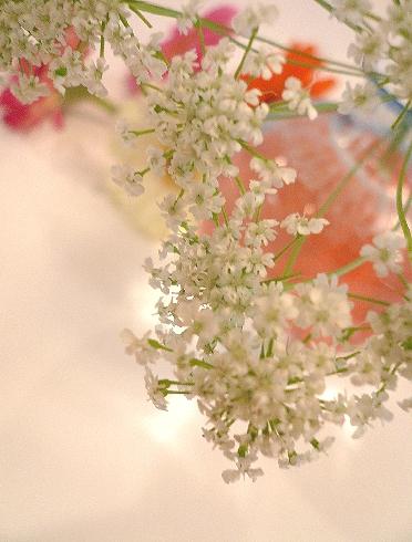 """BABBI ホワイトディ のプレゼント 2008 。。・**゜。*・。♬♪ ・。+・・""""*_a0053662_2212450.jpg"""