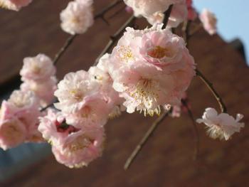 春の便り_d0118071_15532424.jpg