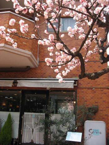 春の便り_d0118071_15534215.jpg