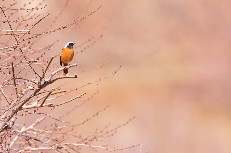 梅と鳥さん_f0053272_15592434.jpg