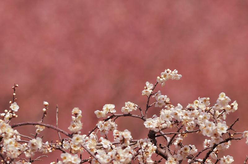 梅と鳥さん_f0053272_161032.jpg