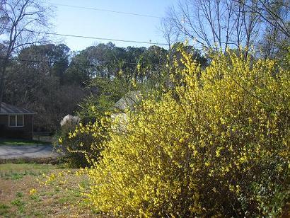 春なので。。_b0121501_1231425.jpg